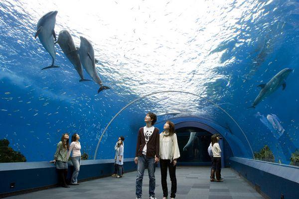 Resultado de imagem para parque aquatico yokohama