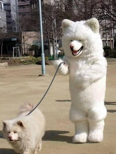 cosplay cachorro