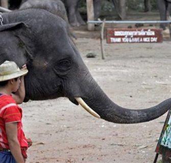 elefante-desenhista-tailandia