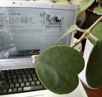Midori-san, a planta blogueira