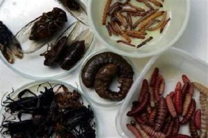 comer inseto na china