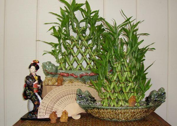 Bambu da sorte 1