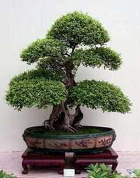 http://www.japaoemfoco.com/wp-content/uploads/2010/06/bonsai.jpg