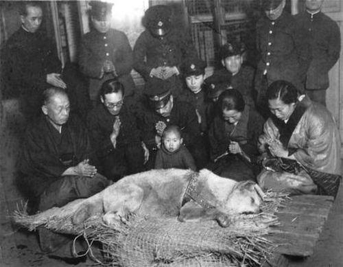 Foto tirada durante o funeral de Hachikō em 8 de março de 1934