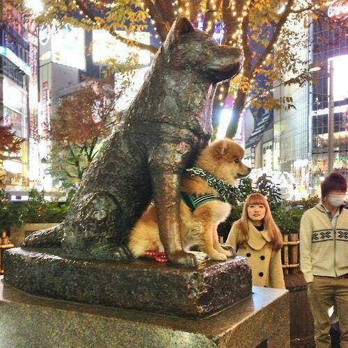 estátua de Hachiko em Shibuya