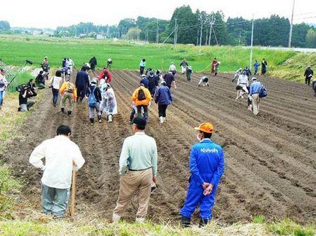Trabalho em equipe : Voluntários se unem para plantar girassóis