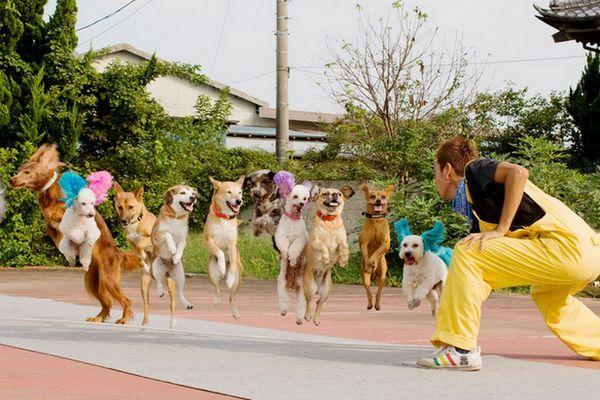 13 cães pulando corda ao mesmo tempo