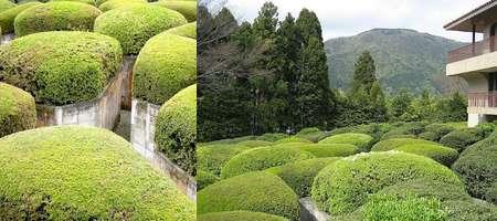 Hakone Open Air Museum Labirinto