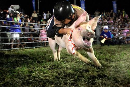 Rodeio porco Ehime