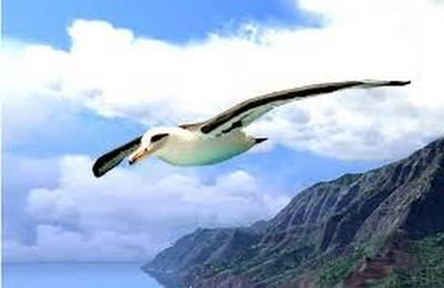Ahoudori, os pássaros estúpidos 4