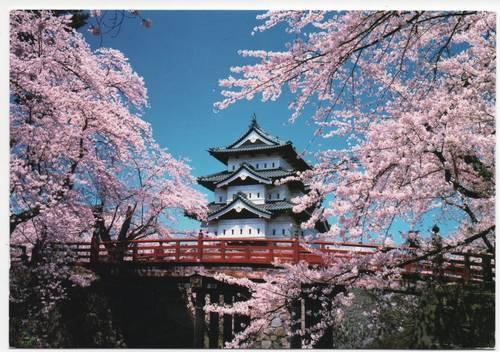 Castelo de Hirosaki sakura