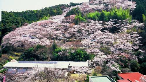 Makino Koen Sakawa, Província de Kochi