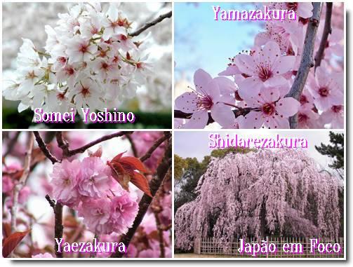 Sakura Somei variedades