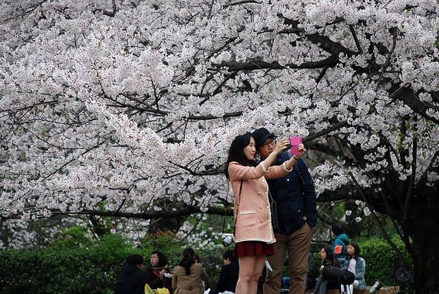 100 locais populares para apreciar as belas flores de cerejeira no Japão
