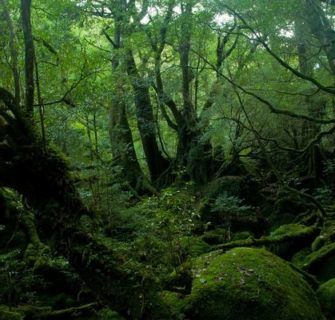 Floresta de Aokigahara