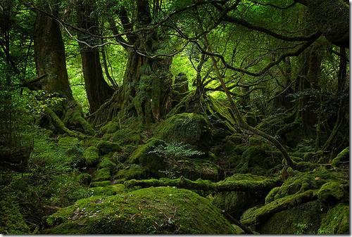 Ilha de Yakushima, Província de Kagoshima
