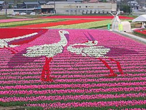Tantou Tulip Festival de 2007, Tema Grous