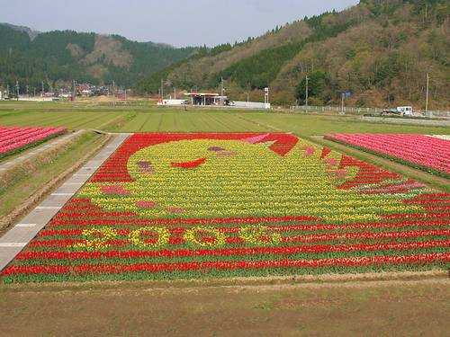 Tantou Tulip Festival de 2006, Tema Tan Haba