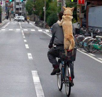 Cultura da bicicleta no Japão