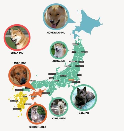 Cães nativos do Japão