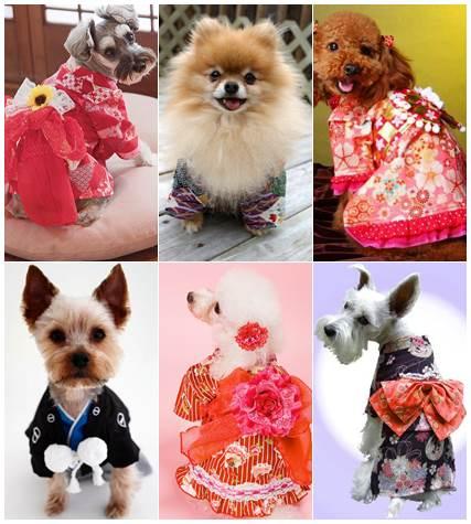 Cães vestidos de quimono