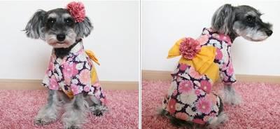 Cachorro de quimono 20