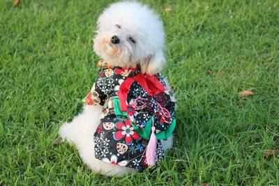 Cachorro de quimono 21