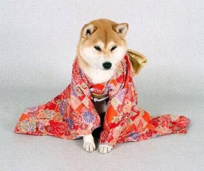 Cachorro de quimono 22