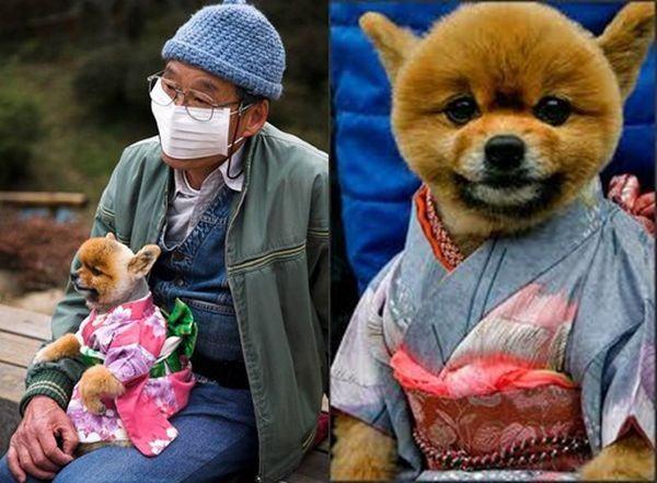 Cachorro de quimono
