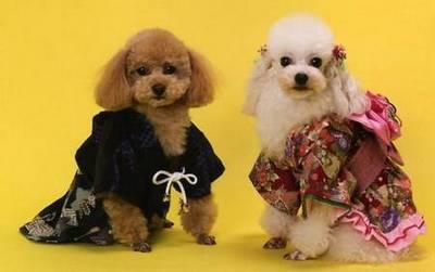 Cachorro de quimono 9