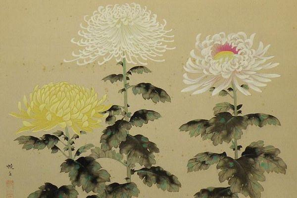 KIKU Chrysanthemum Hankyu