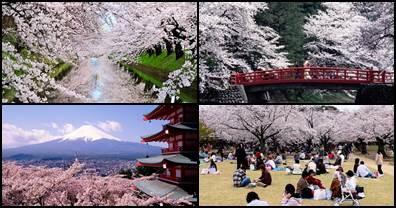 Primavera no Japão Haru