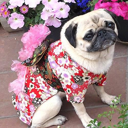 cão de quimono 1