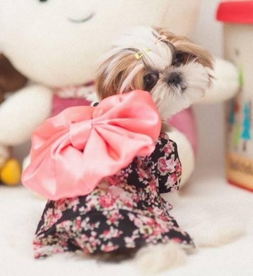 cão de quimono 2
