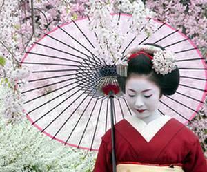 sakura gueixa
