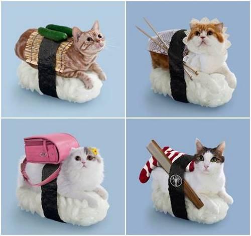Nekozshi , sushi de gatos