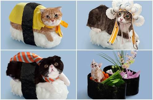 Sushicats - Gatos Sushi