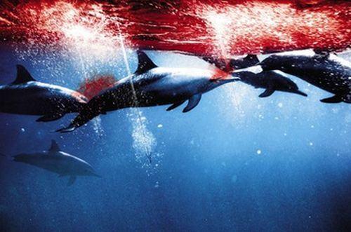 Caça à golfinhos em Taiji no Japão