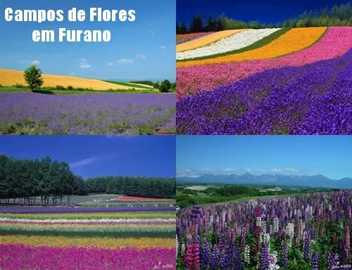Campos de Flores em Furano, Hokkaido