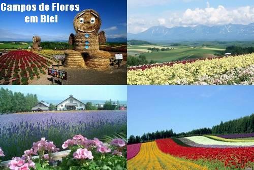 Campos de flores em Biei
