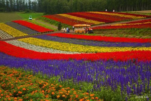 Campos de flores em Shikisai-no-oka, Hokkaido