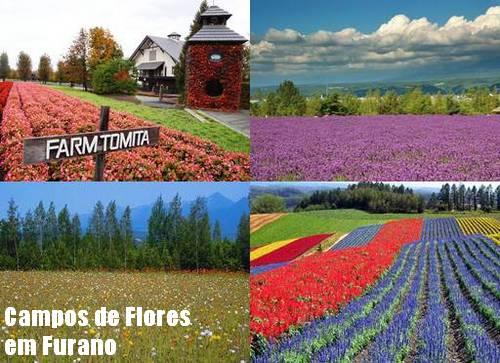 Fazenda Tomita em Furano fotos