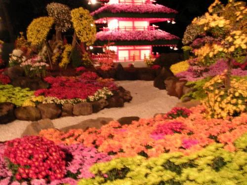 Hirosaki Festival dos Crisântemos Kiku Matsuri