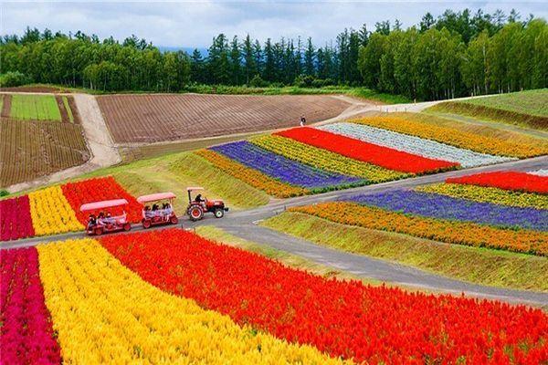 flower carpet hokkaido