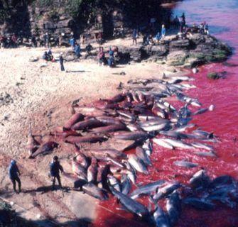 golfinhos no Japão