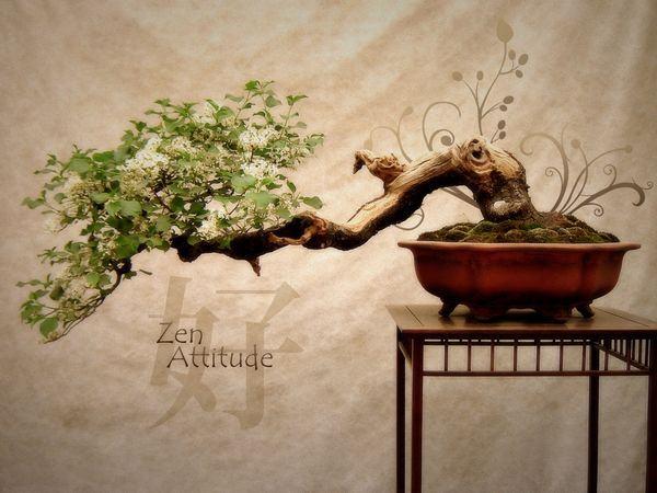 Atitude zen - Wabi Sabi