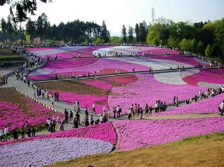 Chichibu Hitsujiyama Park em Saitama