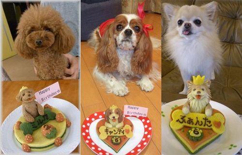 Bolo de Aniversário para cães fotos