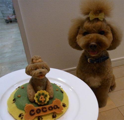 bolo de aniversário para cães