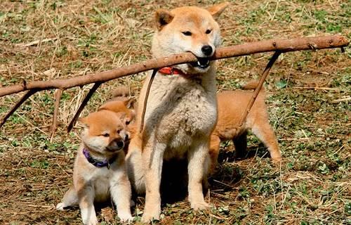 Mari e seus três filhotes